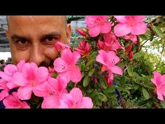 Azalea - Trasplantar fuera de fecha - YouTube