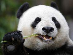 YOUR BLOG TIME: Panda time (hora del panda)