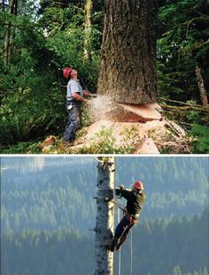 Loggers / I realize a tree has a life also but there's nothing like watching those big ones fall.