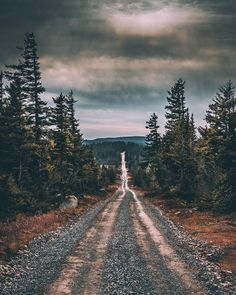 Pine trees and open dirt road