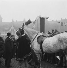 Amerigo paard van sinterklaas