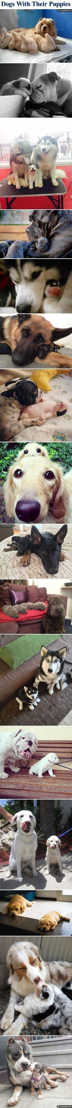 Dogs With Their Puppies cute animals dogs adorable dog puppy animal pets funny…