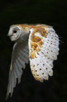 Everyone's talking about superb owls!