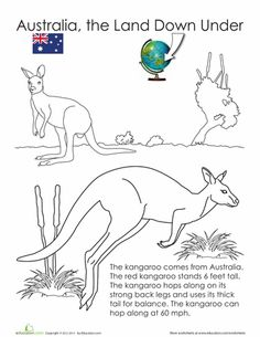 Animals Of Australia The Land Down Under