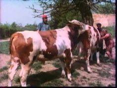 Az ibafai kovboj (1987)