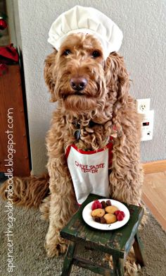 The products in this review are the Honey Hearts and the Puppy Kisses To Go. Courtesy of the Three Dog Bakery!