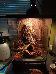 Arboreal vivarium setup