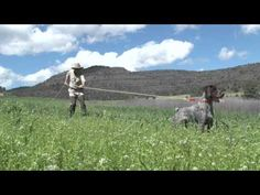 Dog Training & Bird Hunting Tip: Newton's Law and the Steady Gundog - WingshootingUSA.org - http://www.7tv.net/dog-training-bird-hunting-tip-newtons-law-and-the-steady-gundog-wingshootingusa-org/