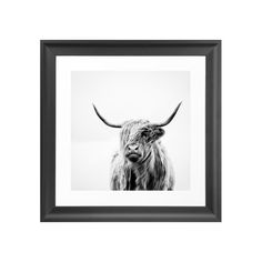 Add some character to perk up a living room, bedroom, or den wall with this charming photographic print. With its handsome monochromatic cow portrait, The Highland Steer Art Print will make a delightfu... Find the Highland Steer Art Print, as seen in the Wild, Stylish & Free Collection at http://dotandbo.com/collections/wild-stylish-and-free?utm_source=pinterest&utm_medium=organic&db_sku=114188