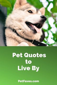 Add these pet lover quotes to your collection of pet quotes. Pet Quotes Dog, Animal Quotes, Skunk Pet, Dog Growling, Dog Breeds List, Group Of Dogs, Dog Books, Dog List