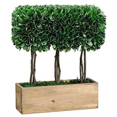 15' Dried Look Boxwood Artificial Topiary Plant w/Wood Pot -Green (pack of 2) *** Check out the image by visiting the link.