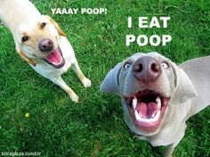 Sounds exactly like my retarded dogs