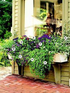 Add drama to a big window with a window box: http://www.bhg.com/gardening/container/plans-ideas/plant-combinations-for-sunny-spot-window-boxes/?socsrc=bhgpin072814adddramatoabigwindow&page=4