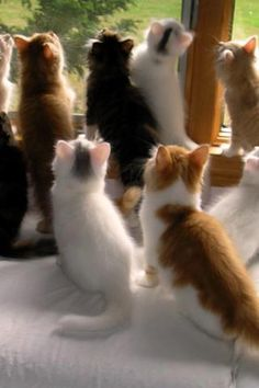 cats...................................Had  a ohoto of 4 of mine by the door like this!