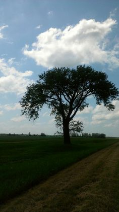 Somewhere between Brandon and Portage la Prairie, Manitoba - THE HALF WAY TREE! :D (Halfway between Brandon and Winnipeg) *giddy grin* How To Raise Money, Wonders Of The World, Places Ive Been, Cool Photos, Flora, Wildlife, Walking, Country Roads, Trees