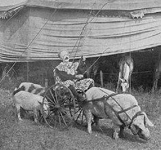 MONS. NATALIE: Ringling Bros. Circus (1897)
