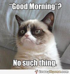 I agree, Grumpy Cat.