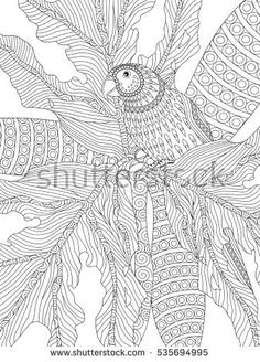 Adult Coloring Design.  Intricate drawing of parrot for coloring in.