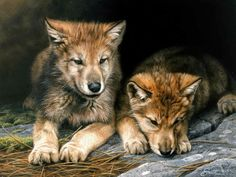 Wolf Cubs by Daniel Smith