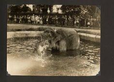 Vroeger waren dierentuinen zo veel leuker | VICE | Netherlands