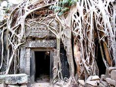 Ta Prohm Temples - Atlas Obscura - Photo Blog