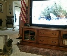 A Half Hour Later, Fuzzy Still Watching Jack Hanna.