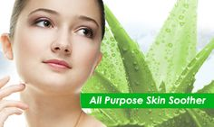 Aloe Vera Moisturizers have a natural base and the nutrients of the Aloe Vera are harvested by experts to prepare a concoction that penetrates deep into the skin