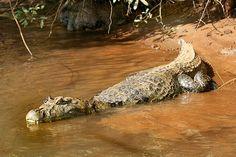 Iguaçu National Park