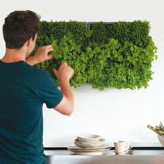 Karoo by D | Vertical Herbs' System