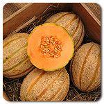 Organic Magnifienza F1 Hybrid Cantaloupe