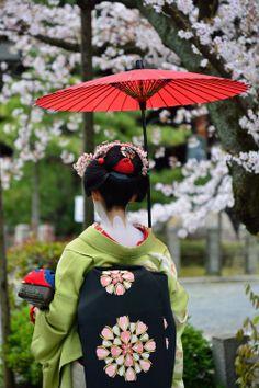 Maiko Fukuharu of Gion Higashi under cherry blossoms