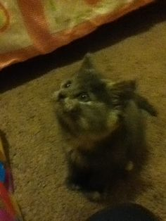 Ooh mouse lets chase ! Lol love my kitten