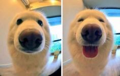 These photos were taken before and after the photographer called him a good boy