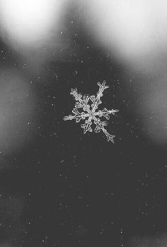Find images and videos about black and white, winter and christmas on We Heart It - the app to get lost in what you love. White Photography, Nature Photography, Christmas Wallpaper, Snowflake Wallpaper, Snowflake Images, Winter Wallpaper, Christmas Lockscreen, Snowflake Snowflake, Special Snowflake