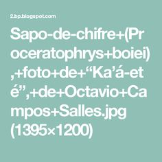 "Sapo-de-chifre+(Proceratophrys+boiei),+foto+de+""Ka'á-eté"",+de+Octavio+Campos+Salles.jpg (1395×1200)"