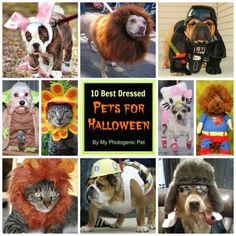 10 Best Dressed Pets for Halloween - Vote for your favorite!