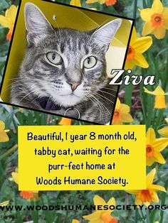 Ziva is at Woods Humane Society in San Luis Obispo, CA