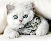 Ähnliche Artikel wie Animal Love  11x14 Original Fine Art Photograph auf Etsy