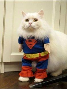 Кот супер мен