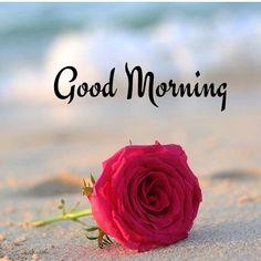 Good Morning India, Good Morning Flowers, Good Morning Greetings, Good Morning Good Night, Good Morning Quotes, Good Morning Picture Messages, Morning Pictures, Red Flowers, Beautiful Flowers