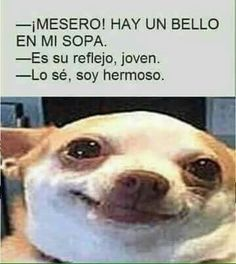 Read 3 from the story Memes sobre la escuela by with reads. xd io :v Funny Spanish Memes, Spanish Humor, Stupid Funny Memes, Hilarious, Funny Shit, Mundo Meme, Funny Photos, Funny Images, Mexican Memes