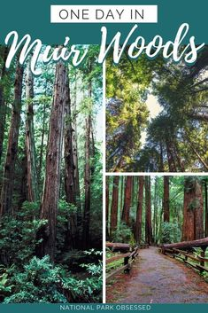 Looking to spend the day in outdoors without getting too far from San Francisco. Here is how to make the most of one Day in Muir Woods National Monument.Muir Woods national monument vacation. Muir Woods national park | Muir Woods national park vacation | Muir Woods national park photography | Muir Woods national park itinerary | Muir Woods hikes | Muir Woods itinerary#muirwoods #califoriana #nationalparks #nationalpark #nationamonument #findyourpark #nationalparkobsessed #nationalparkgeek
