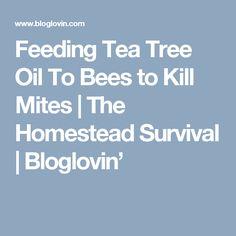 Feeding Tea Tree Oil To Bees to Kill Mites | The Homestead Survival | Bloglovin'