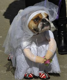 The bride is bored