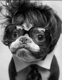 A toupee, when used correctly, can actually be a conversation-starter! | 15 Bits Of Fashion Advice From Dogs Who Are More Stylish Than Human Beings