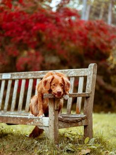 Do you find your dog acting restless and uncomfortable? Here'w what you can do to help your dog relax. Dog Training Classes, Puppy Training Tips, Best Dog Training, Become A Dog Trainer, Dog Crying, Dog Show, Dog Life, Pet Care, Best Dogs