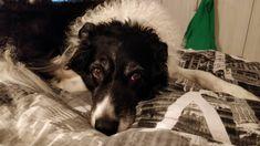 Kip ❤️ Dogs, Animals, Animaux, Doggies, Animal, Animales, Pet Dogs, Dog, Animais