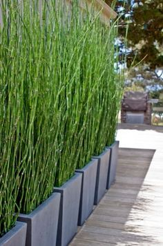 massed planters filled with ..are they bamboo? Fabulous idea for a privacy screen