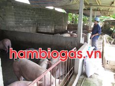 Chăn nuôi hiệu quả nhờ hầm khí sinh học biogas