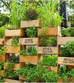 Vertical planter display in the vertical vegetable garden planters diy vert Vegetable Garden Planters, Vertical Vegetable Gardens, Vertical Garden Diy, Diy Garden, Edible Garden, Garden Projects, Container Gardening, Verticle Herb Garden, Small Yard Vegetable Garden Ideas